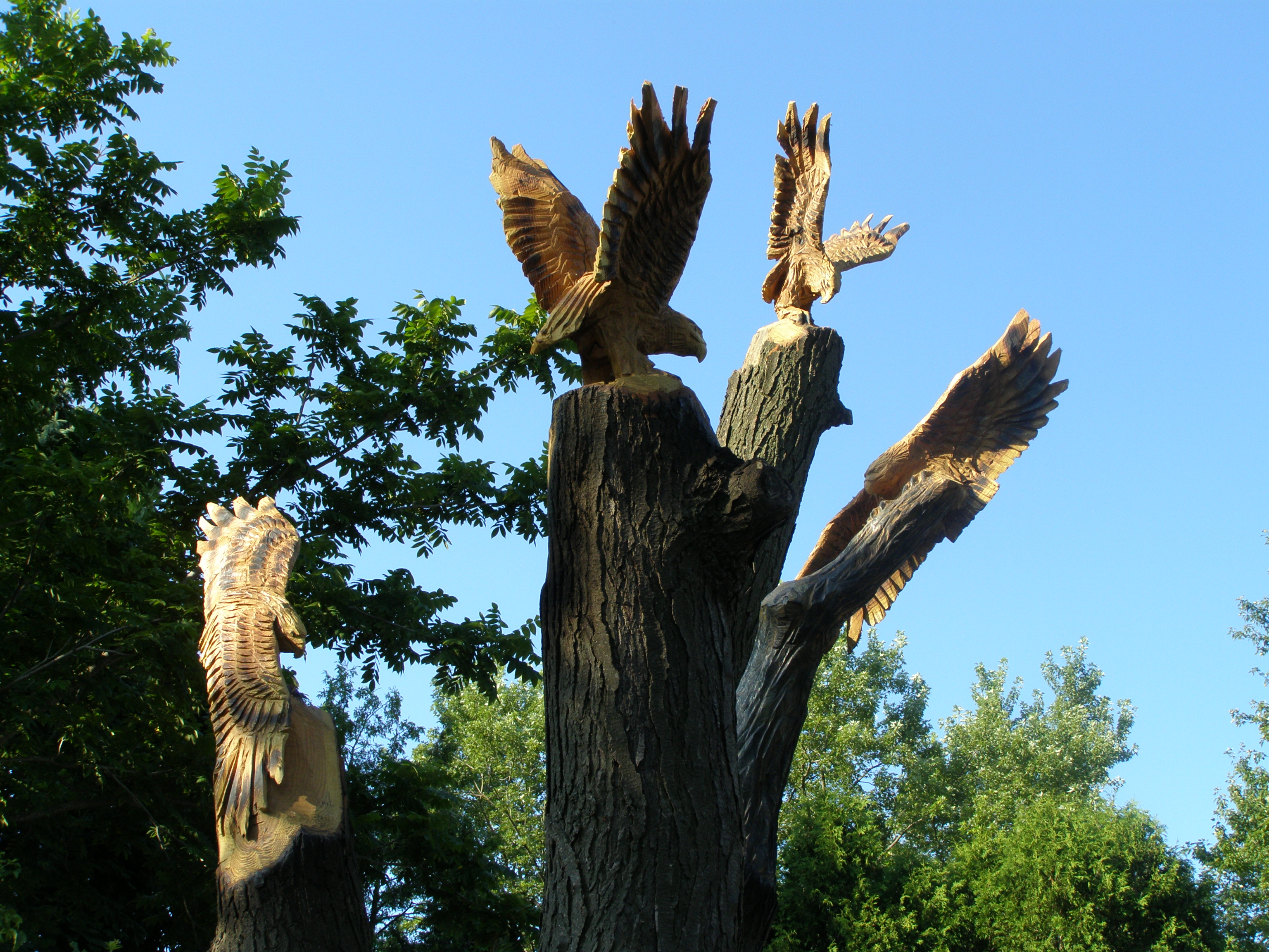 Chainsaw, Carving, Hawks