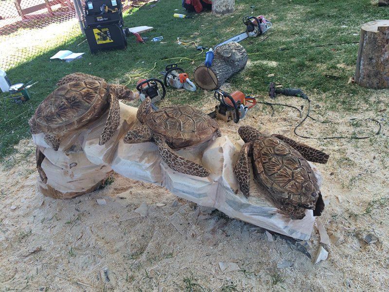 Carving, Sea Turtles, Turtles