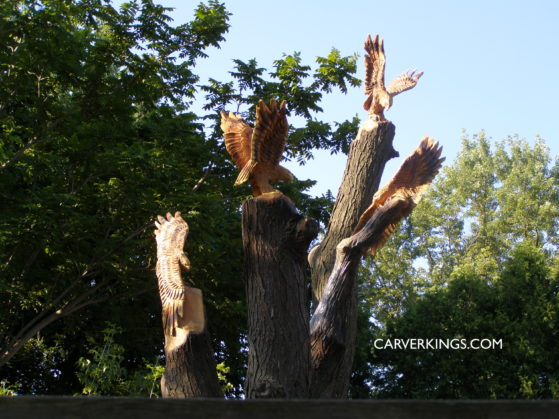 Carving, Hawks, Red Tailed Hawk