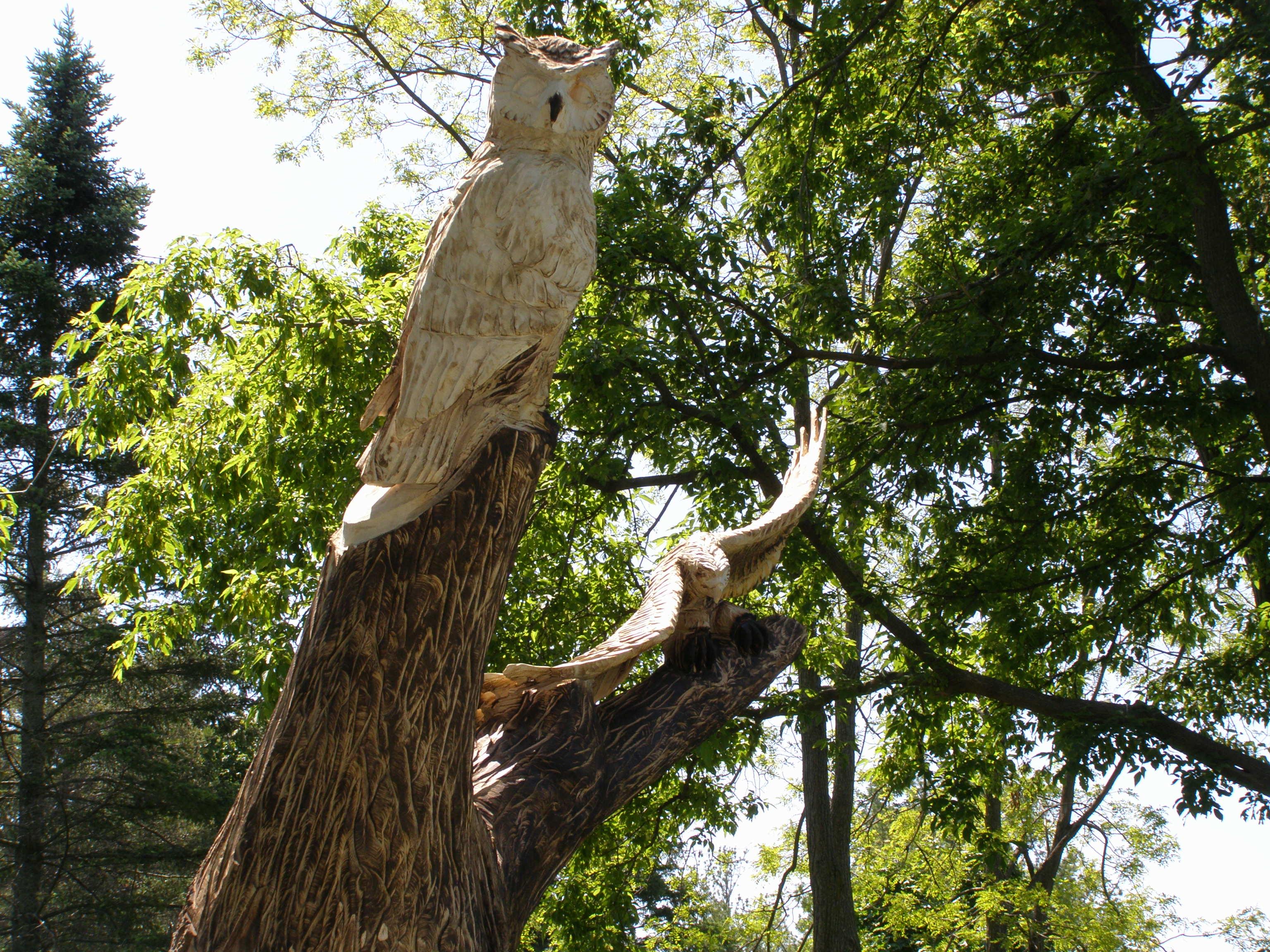 Wood, Owl, Hawk